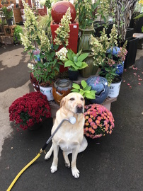 Hi Yvonne, Just Wanted You To Know How Enjoyable, Knowledgeable And Very  Pleasant Everyone Is At Patio Gardens. As Well As The So Many Different  Stock Items ...